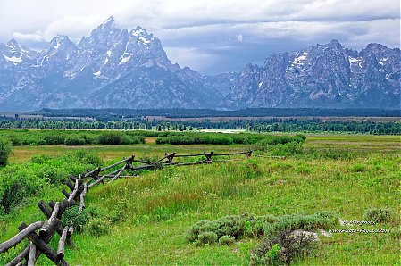 Une prairie dans le parc national de Grand Teton
