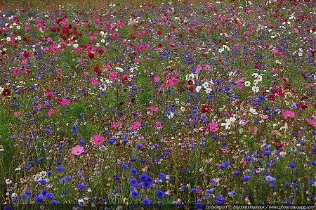 Accueil \u003e Images de nature \u003e Fleurs , Photo,Paysage.com