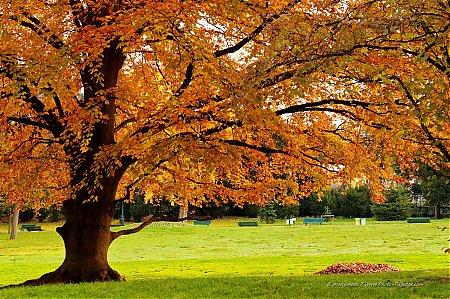 Fonds d 39 cran photo paysage com - Image automne gratuite imprimer ...