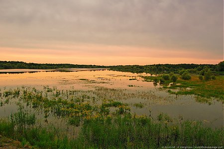 marecages-lac-du-der-88.jpg