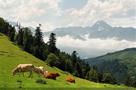 pyrenees-13-col_d_aspin.jpg